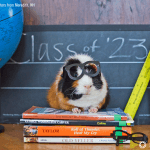 How to Meet State Requirements with a Four-day Homeschool Week