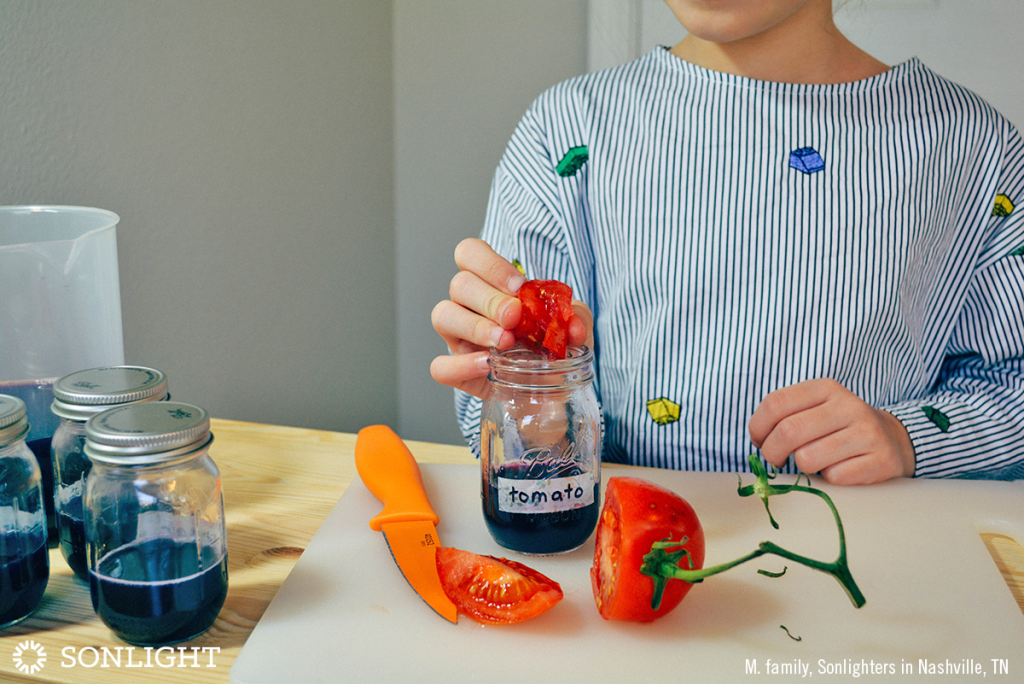 Squeeze the tomato wedge into the jar labeled tomato, then drop the wedge in the liquid, too.