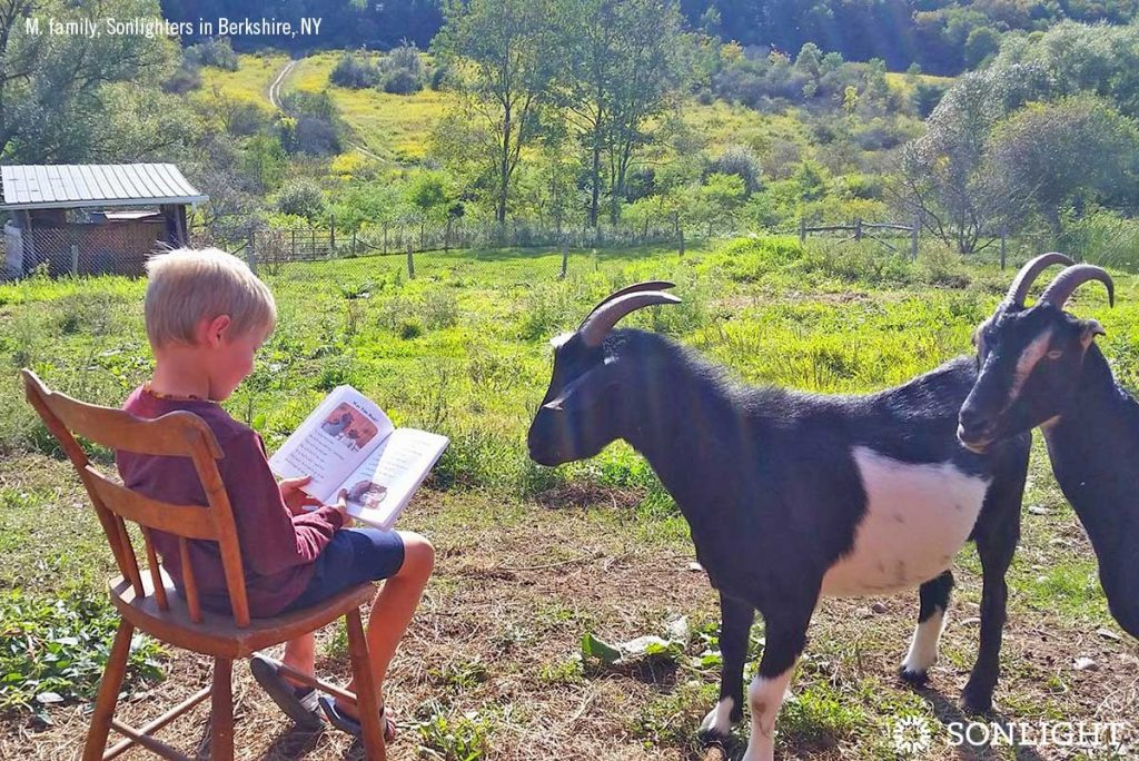 Boy reading to goats outside